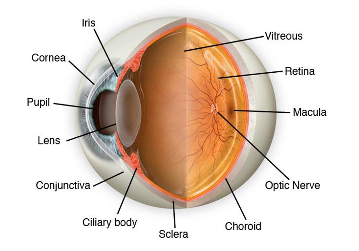 Eyes For Life Spokane Wa Eye Exams And Eye Health